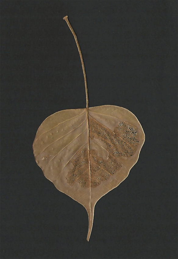 Leaf from the Bhodi tree 1